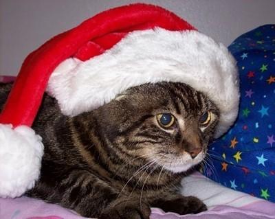 Bugsy wearing a Santa hat.
