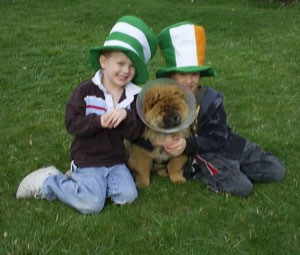 Two boys in St. Patrick tophats with a dog.