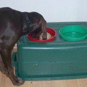 Raised Dog Dish Using Rubbermaid Container