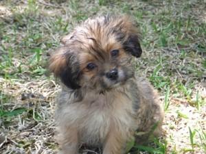 closeup of puppy
