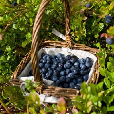 A basket of blueberries