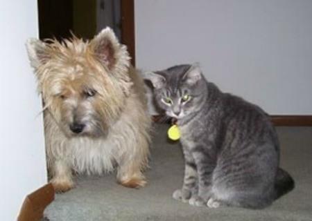 Maggie (Cairn Terrier)