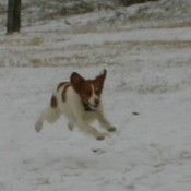 Dog running in the snow.