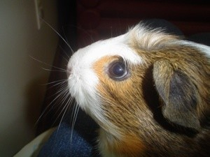 closeup of Molly