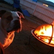 Dog by outdoor firepit.