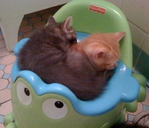 2 kittens sleeping in potty