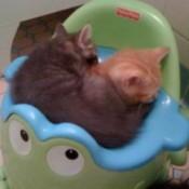 2 kittens sleeping in potty