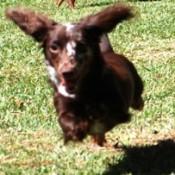 Missy running.