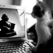 cat by computer