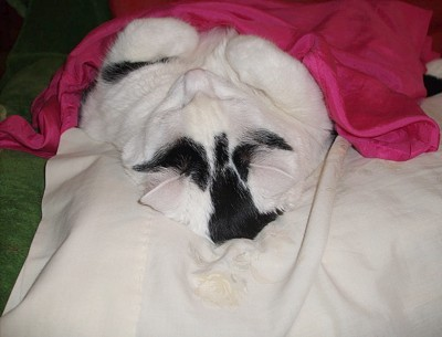 Photo of sleeping cat from head to feet.