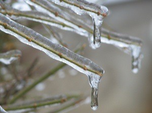 ice on bare branch
