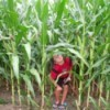 Child in cornfield.