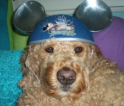 Curly wearing Mickey Mouse hat.
