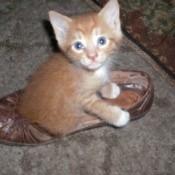 Punkin (Mixed Breed Cat)