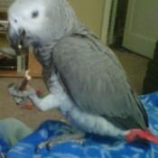 Bird Toys and Treats