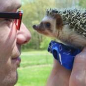 Quillie (Hedgehog)