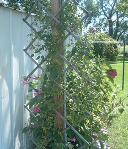 A garden trellis made from a baby gate.