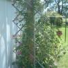 A garden trellis made from a baby gate.
