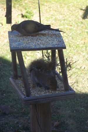 Bird Sharing Food With Squirrel