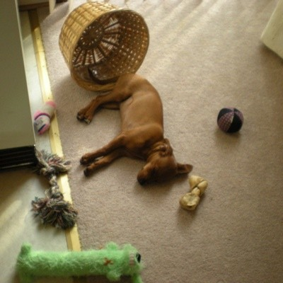 Molly and her toys.