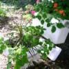 Toilet Planter