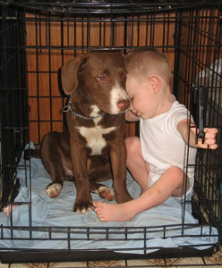 Dog in crate with infant.