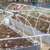 Raised Beds With a PVC Greenhouse Frame