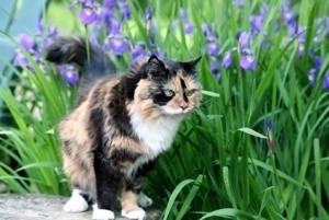 Cat in garden.
