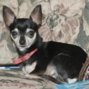 Pedro (Chihuahua)