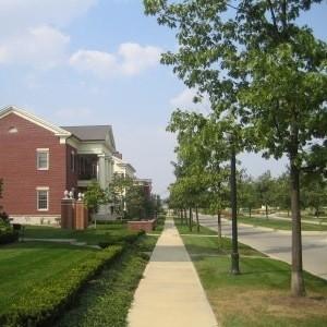 Trees next to sidewalk