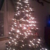 Christmas Tree lit at night