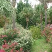 Moody Garden