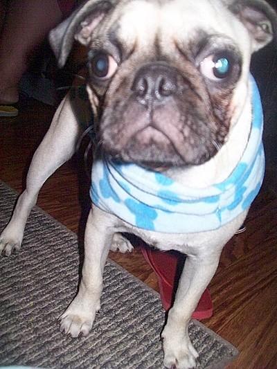 Max (Pug)