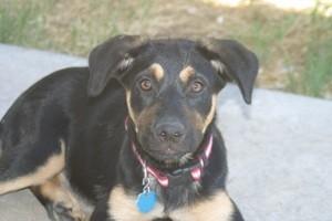 black and tan dogg