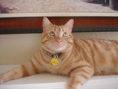 Cat looking up at camera.