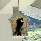 A purple martin sitting on a decorative birdhouse.