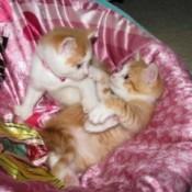 kittens in a basket