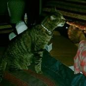 Cat sitting on ottoman.