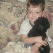 A small boy holding a black toy poodle.