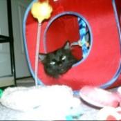 Black cat in fabric cube.