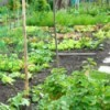 Avoiding Feast And Famine In The Vegetable Garden