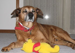 Max with Pooh toy.