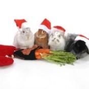 rabbits with Santa hats