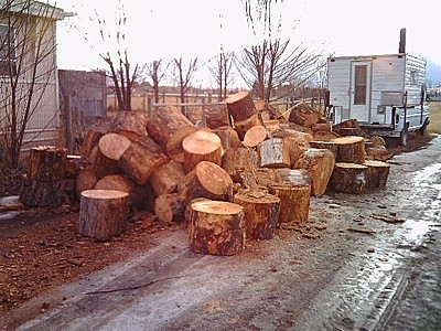 pile of firewood rounds