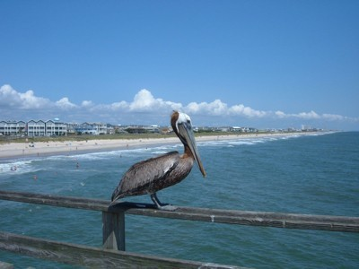 A pelican on a railing near a resort beach.