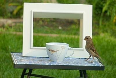A sparrow near a teacup on a table, with a white frame behind.