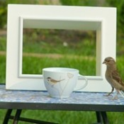 A sparrow near a teacup on a table, with a white frame behind.