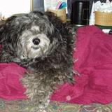 Cookie on hot pink blanket.