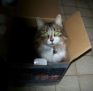 Susie in a cardboard box.