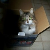 Susie in a cardboard box.